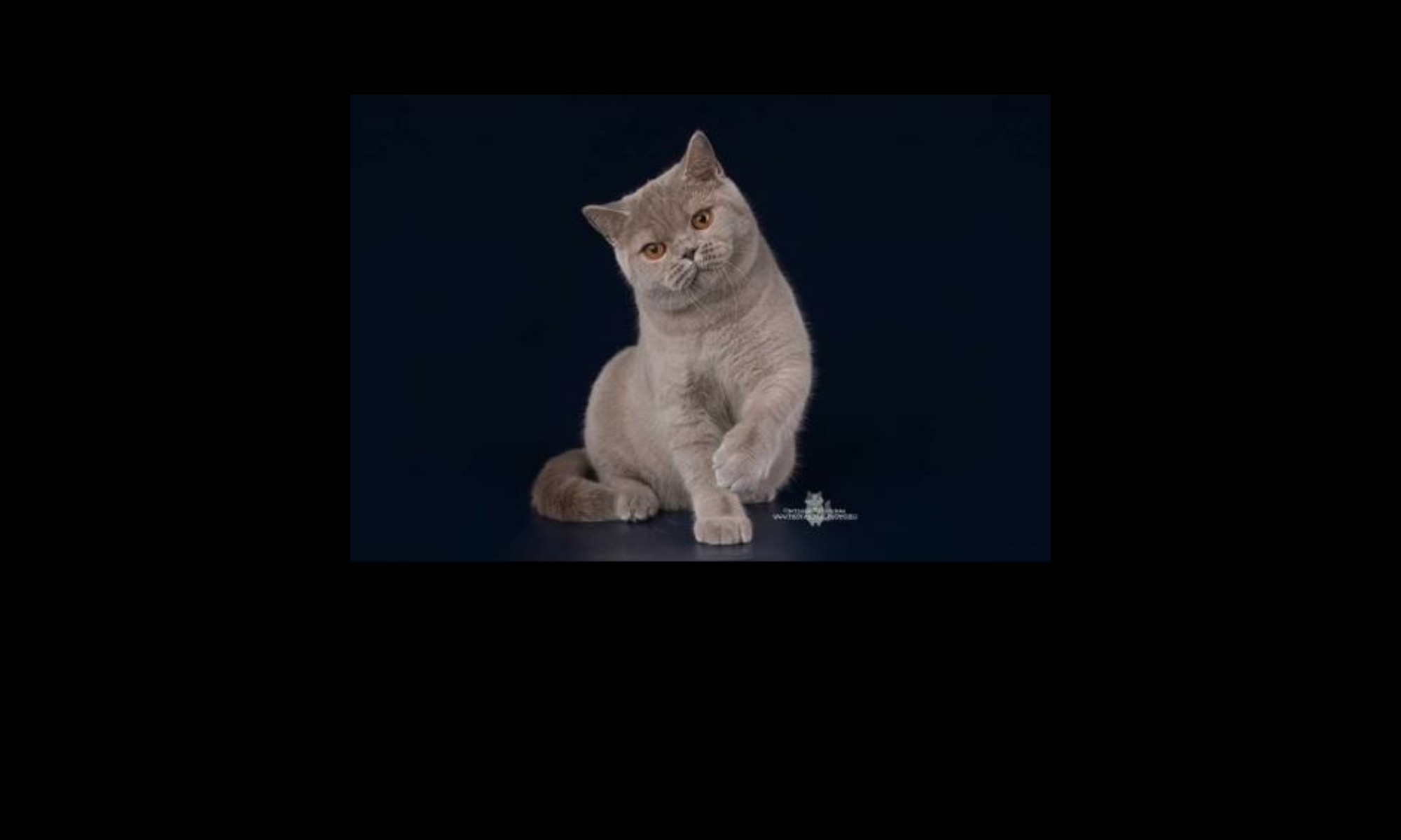 HollywoodBrits Cattery